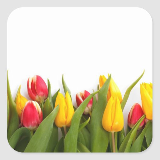Colorful Tulips Square Stickers