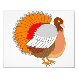 Colorful Turkey Art Photo