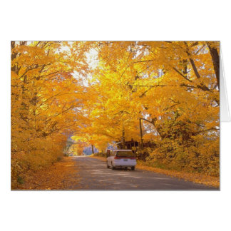 Colorful Vermont Foliage Card
