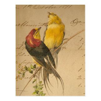 Colorful Vintage Birds On Vintage Ledger Paper Postcards