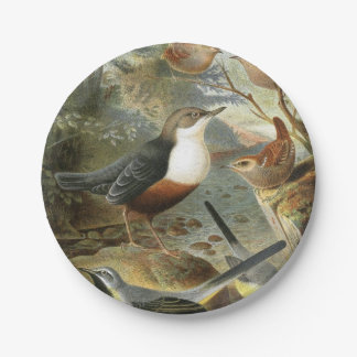 Colorful vintage illustration of birds paper plate 7 inch paper plate