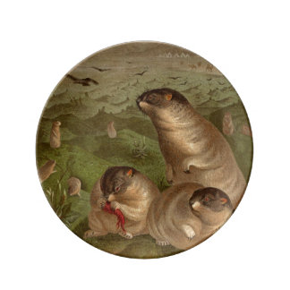 Colorful vintage marmot illustration plate