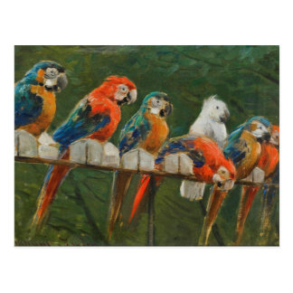 Colorful Vintage Parrots Postcard