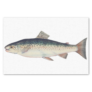 Colorful vintage salmon illustration tissue paper