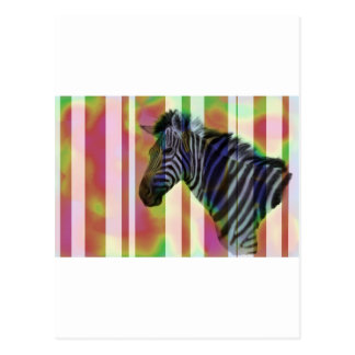 Colorful zebra postcards