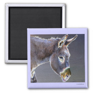 Colors of Light Donkey Square Magnet