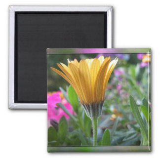 Colors of Spring - Customized Square Magnet