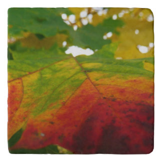 Colors of the Maple Leaf Autumn Nature Photography Trivet