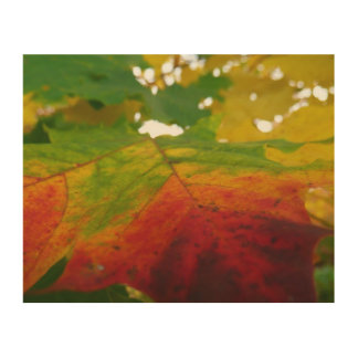 Colors of the Maple Leaf Autumn Nature Photography Wood Canvas
