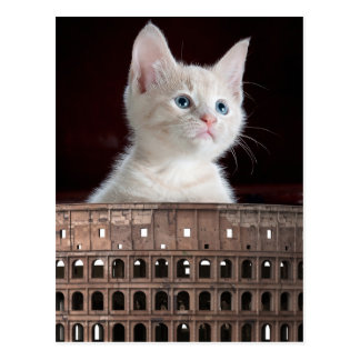 Colosseum big white kitty postcard