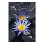 Colour key Water Lilies Photo Print