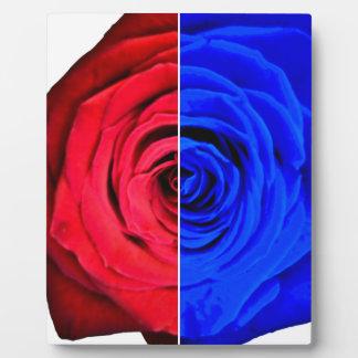 Colour Rose Plaque