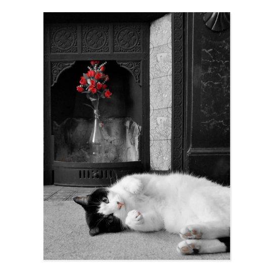 Colour Splash Cat Postcard