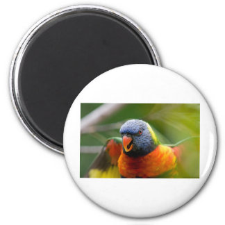 Colourbird 6 Cm Round Magnet