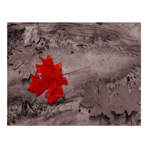 Coloured Leaf on Black and White Photo Poster