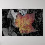 Coloured Leaf on ground