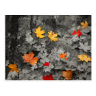 Coloured Leaves in a Black and White World Postcard
