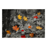 Coloured Leaves in a Black and White World Poster