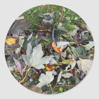 Coloured Leaves Stickers