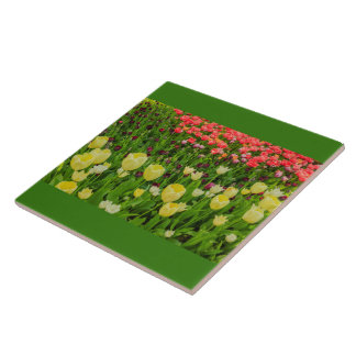 COLOURED TULIPS  IN A PARK ON   CERAMIC  TILE