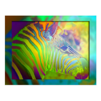 coloured zebra postcards