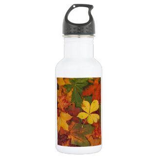 colourful autumn leaves 532 ml water bottle