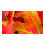 Colourful Autumn Leaves Close-up Pack Of Standard Business Cards