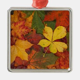 colourful autumn leaves ornament