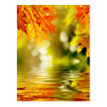 Colourful autumn leaves reflecting in the water 2 postcard