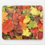 Colourful Background Of Fallen Autumn Leaves Mouse Pad