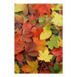 Colourful Background Of Fallen Autumn Leaves Poster