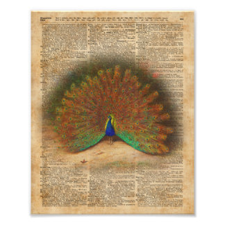 Colourful Beautiful Peacock Vintage Dictionary Art Photographic Print