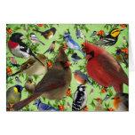 Colourful Bird Collage Card
