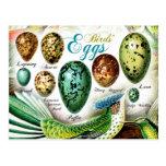 Colourful Birds' Eggs Postcard