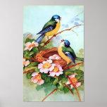 Colourful Birds in Springtime Poster