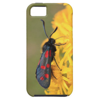 Colourful Burnet Moth photo iPhone 5 Cover