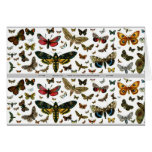 Colourful Butterflies Antiquarian Image Bookmark Note Card