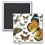 Colourful Butterflies Antiquarian Image Bookmark Square Magnet
