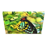 Colourful Butterfly On Canvas