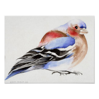 Colourful Chaffinch 2011 Poster