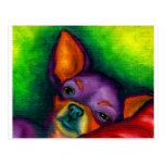 Colourful Chihuahua Postcard