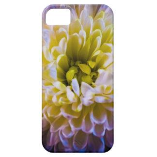 Colourful chrysanthemum iPhone 5 cases