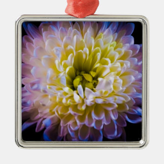 Colourful chrysanthemum christmas ornament
