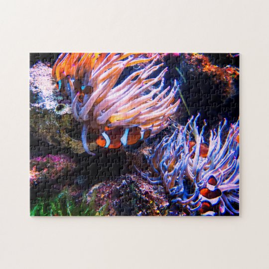 Colourful Clown Fishes Jigsaw Puzzle