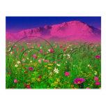 Colourful Colorado, Pikes Peak Mountain Postcard