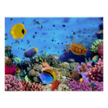 Colourful Coral Reef Critters