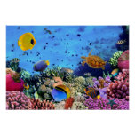 Colourful Coral Reef Critters Poster
