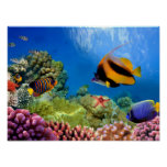 Colourful Coral & Tropical Fish Poster