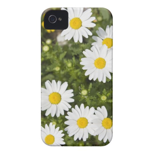 Colourful Daisies iPhone 4 Cover