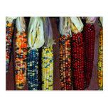 Colourful Flint or Indian Corn